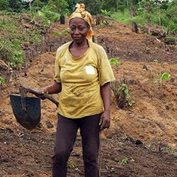 fresh afrika-cameroun-producteur-sula